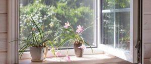 Garden windows customization options